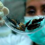 Find out About Chagas Disease Symptoms